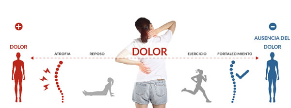 Medical Exercise Area Fisioterapia | Amposta Salud